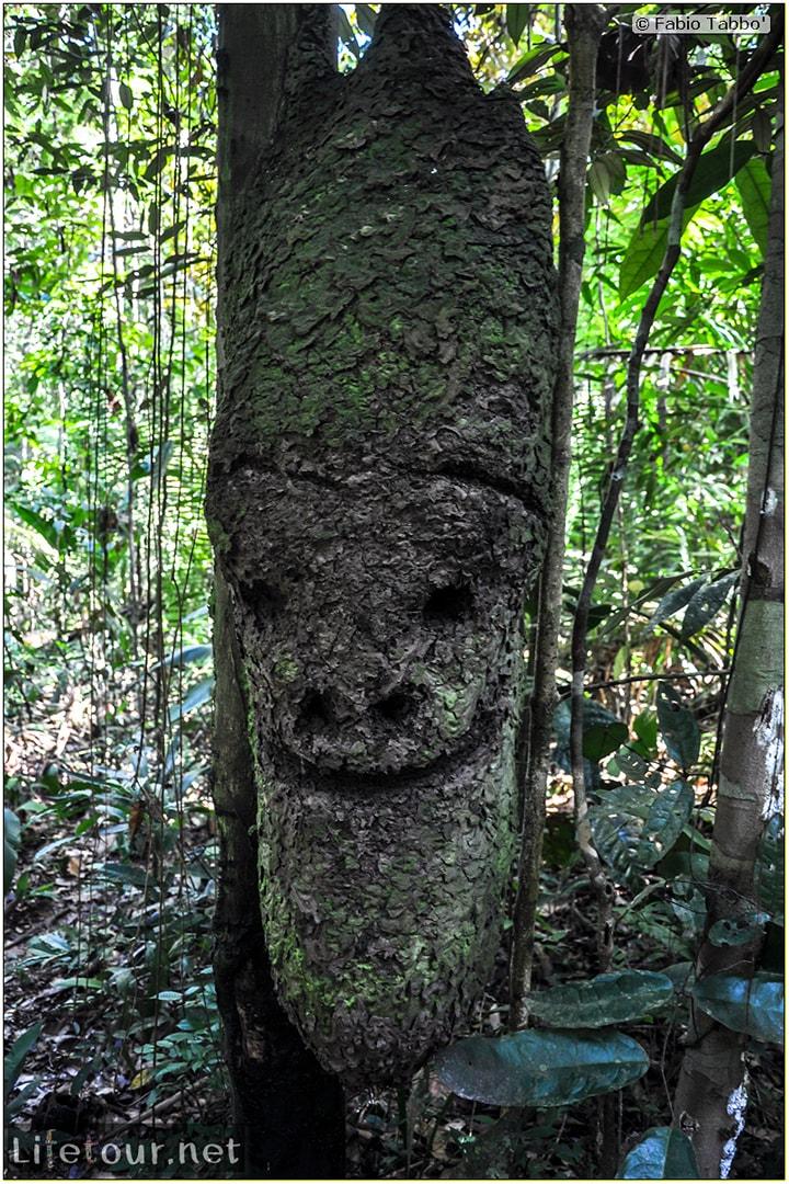 Fabio's LifeTour - Brazil (2015 April-June and October) - Manaus - Amazon Jungle - Jungle trekking - 2- trekking - 10123