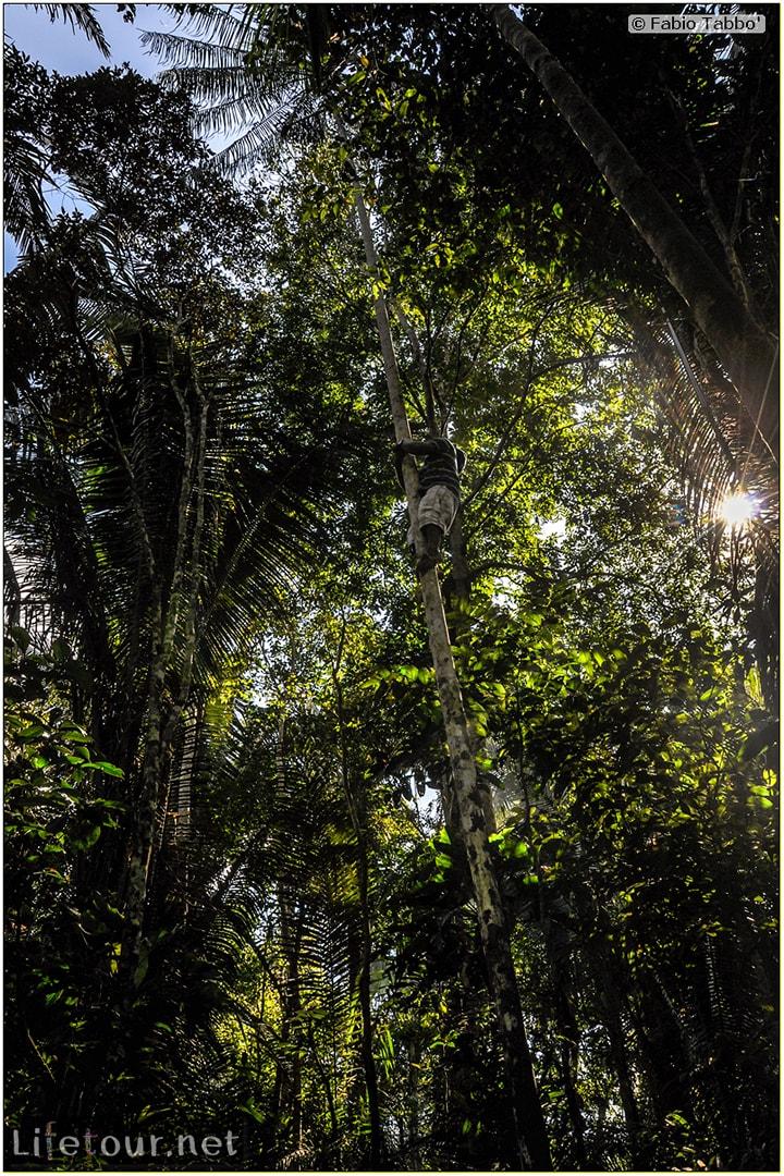 Fabio's LifeTour - Brazil (2015 April-June and October) - Manaus - Amazon Jungle - Jungle trekking - 2- trekking - 10185