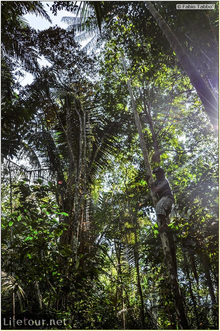 Fabio's LifeTour - Brazil (2015 April-June and October) - Manaus - Amazon Jungle - Jungle trekking - 2- trekking - 10240