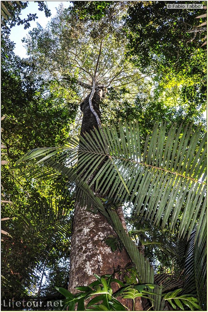 Fabio's LifeTour - Brazil (2015 April-June and October) - Manaus - Amazon Jungle - Jungle trekking - 4- Tarzan swinging - 9360