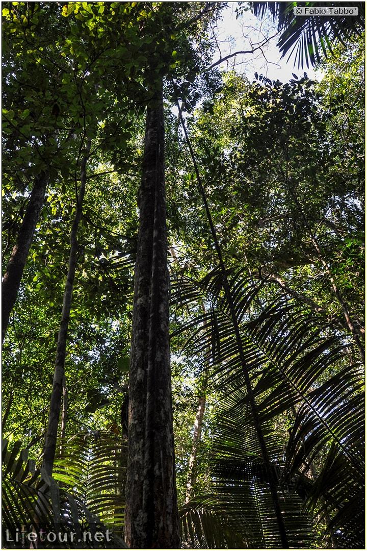 Fabio's LifeTour - Brazil (2015 April-June and October) - Manaus - Amazon Jungle - Jungle trekking - 4- Tarzan swinging - 9384