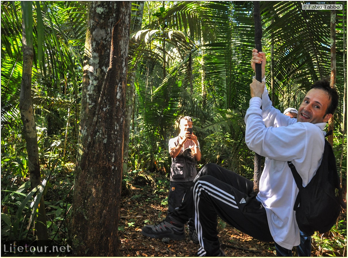 Fabio's LifeTour - Brazil (2015 April-June and October) - Manaus - Amazon Jungle - Jungle trekking - 4- Tarzan swinging - 9455 cover