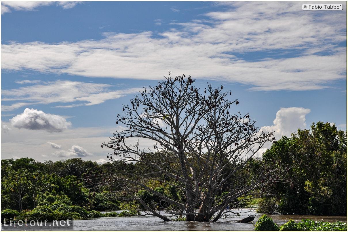 Fabio's LifeTour - Brazil (2015 April-June and October) - Manaus - Amazon Jungle - Parque do Janauary - 3- Water lilies - 11119