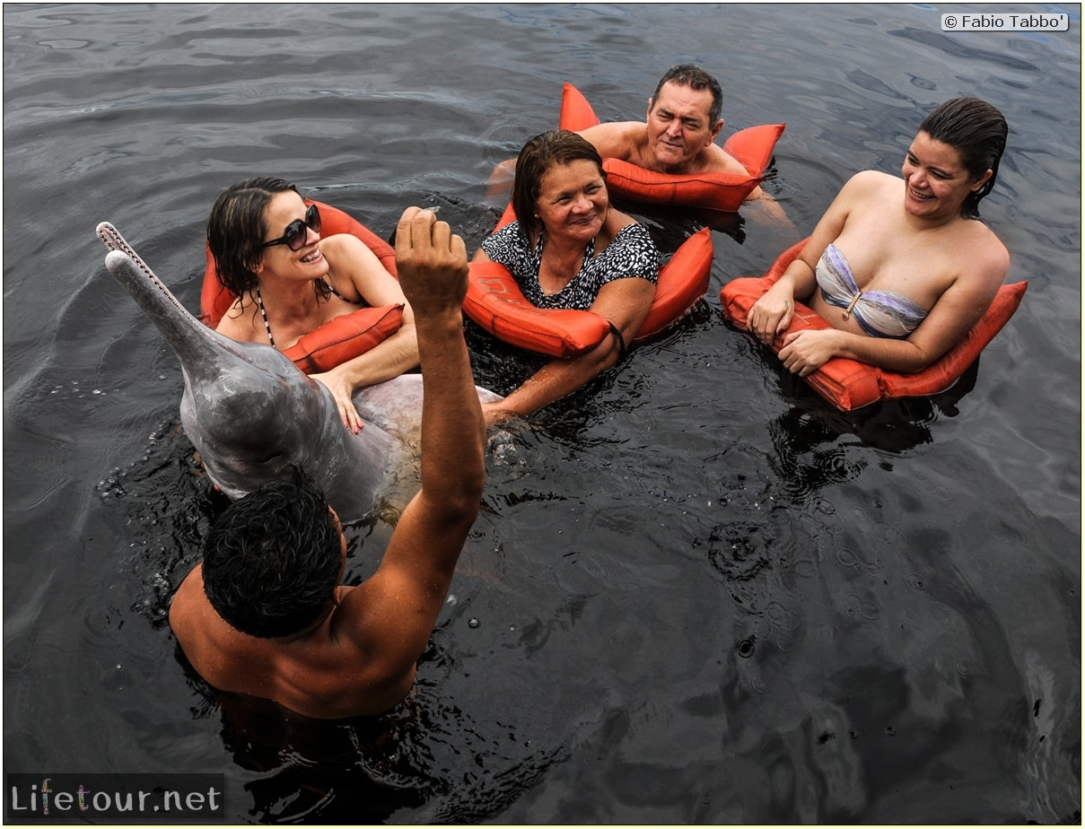 Fabio's LifeTour - Brazil (2015 April-June and October) - Manaus - Amazon Jungle - Pink dolphin petting (Botos encounter) - 4051
