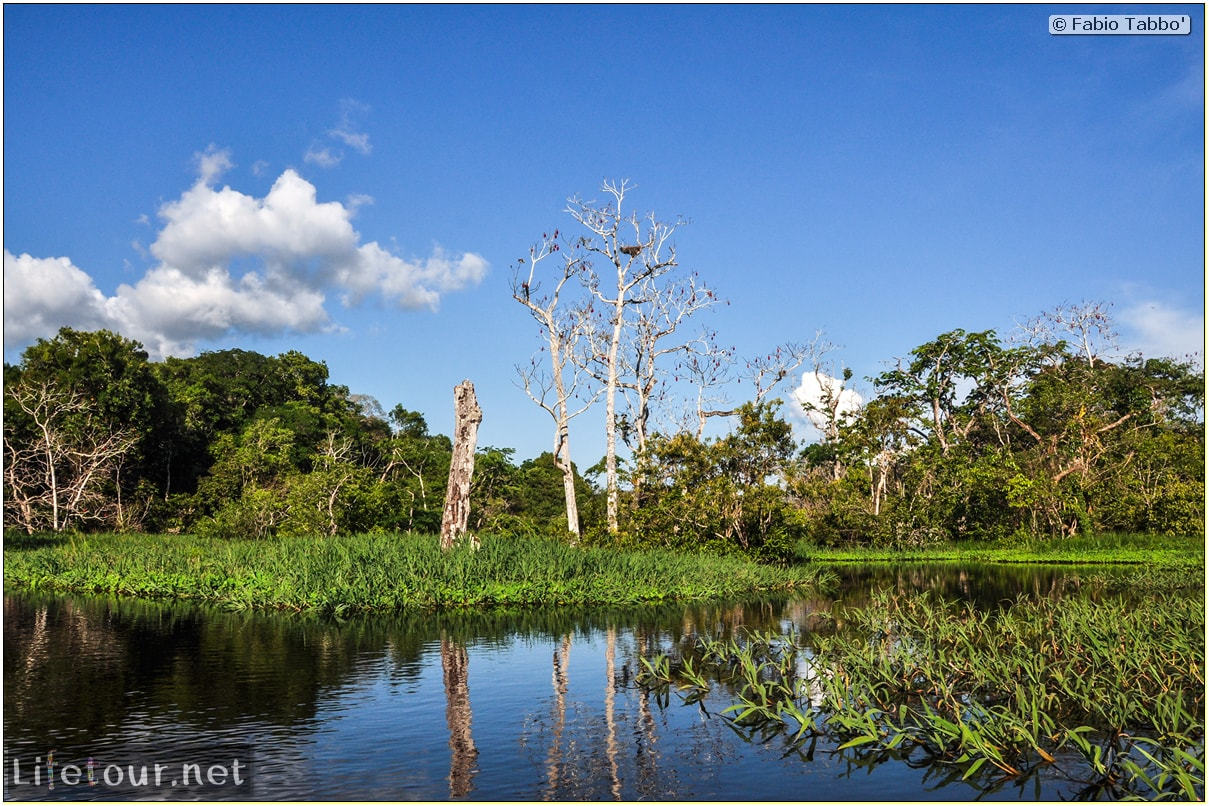 Fabio's LifeTour - Brazil (2015 April-June and October) - Manaus - Amazon Jungle - Piranha fishing - 10203
