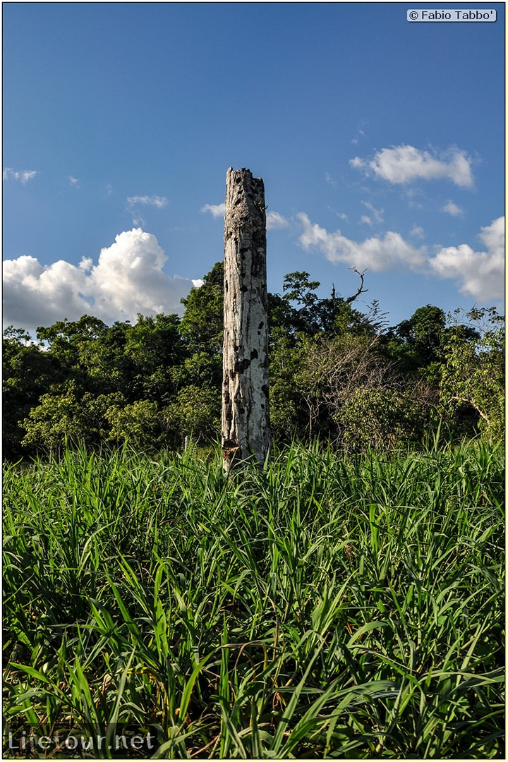 Fabio's LifeTour - Brazil (2015 April-June and October) - Manaus - Amazon Jungle - Piranha fishing - 10279