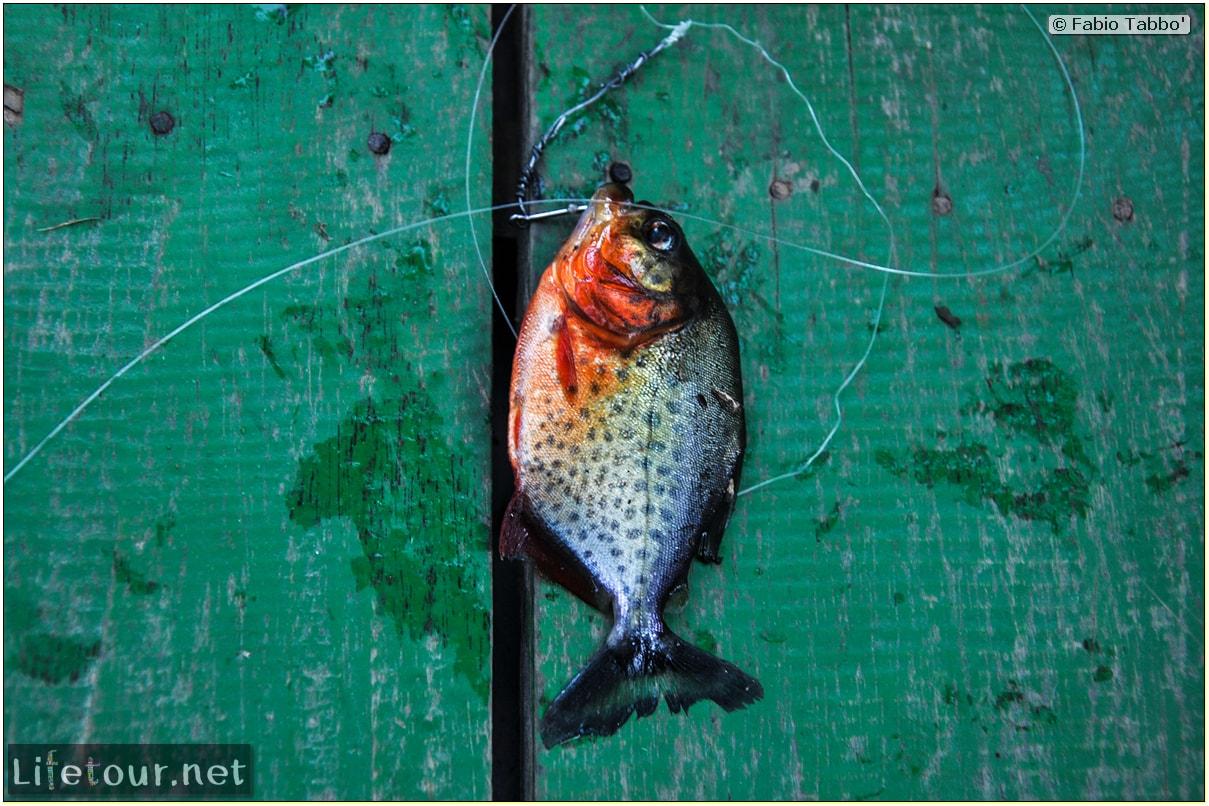 Fabio's LifeTour - Brazil (2015 April-June and October) - Manaus - Amazon Jungle - Piranha fishing - 10771 cover