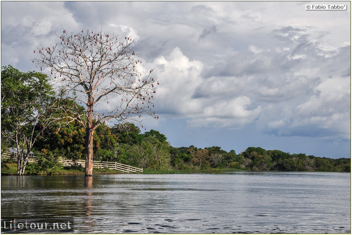 Fabio's LifeTour - Brazil (2015 April-June and October) - Manaus - Amazon Jungle - Piranha fishing - 8731