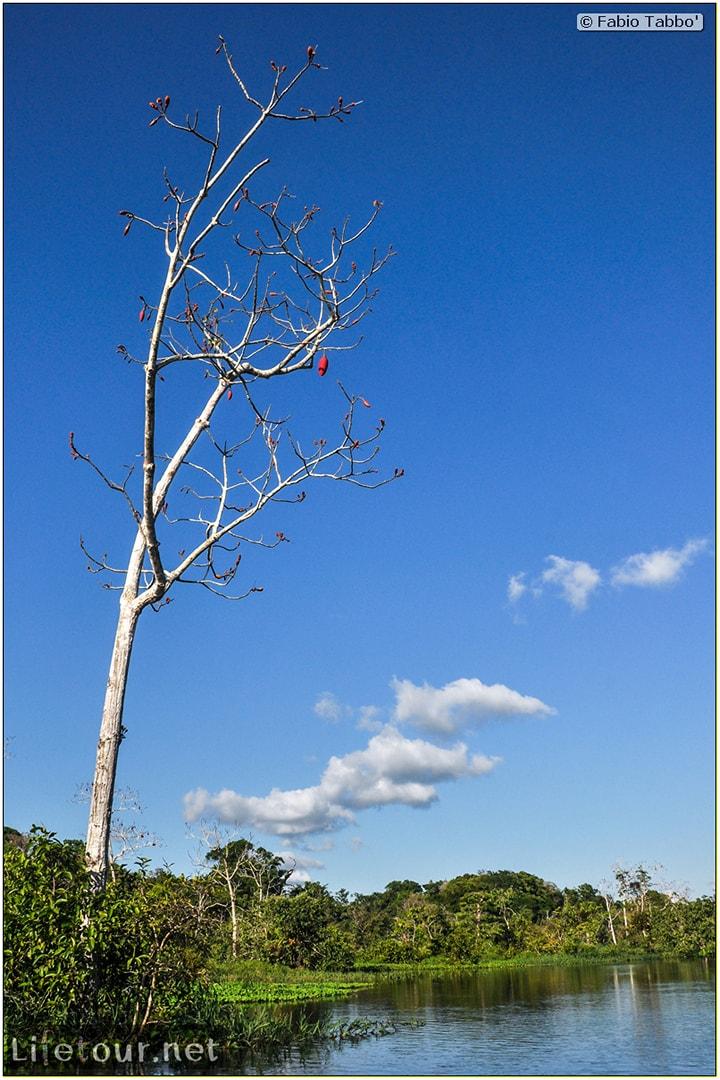 Fabio's LifeTour - Brazil (2015 April-June and October) - Manaus - Amazon Jungle - Piranha fishing - 9963