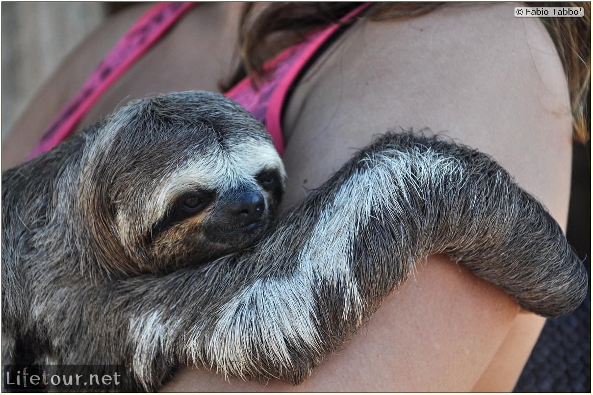 Fabio's LifeTour - Brazil (2015 April-June and October) - Manaus - Amazon Jungle - Sloth petting - 10897