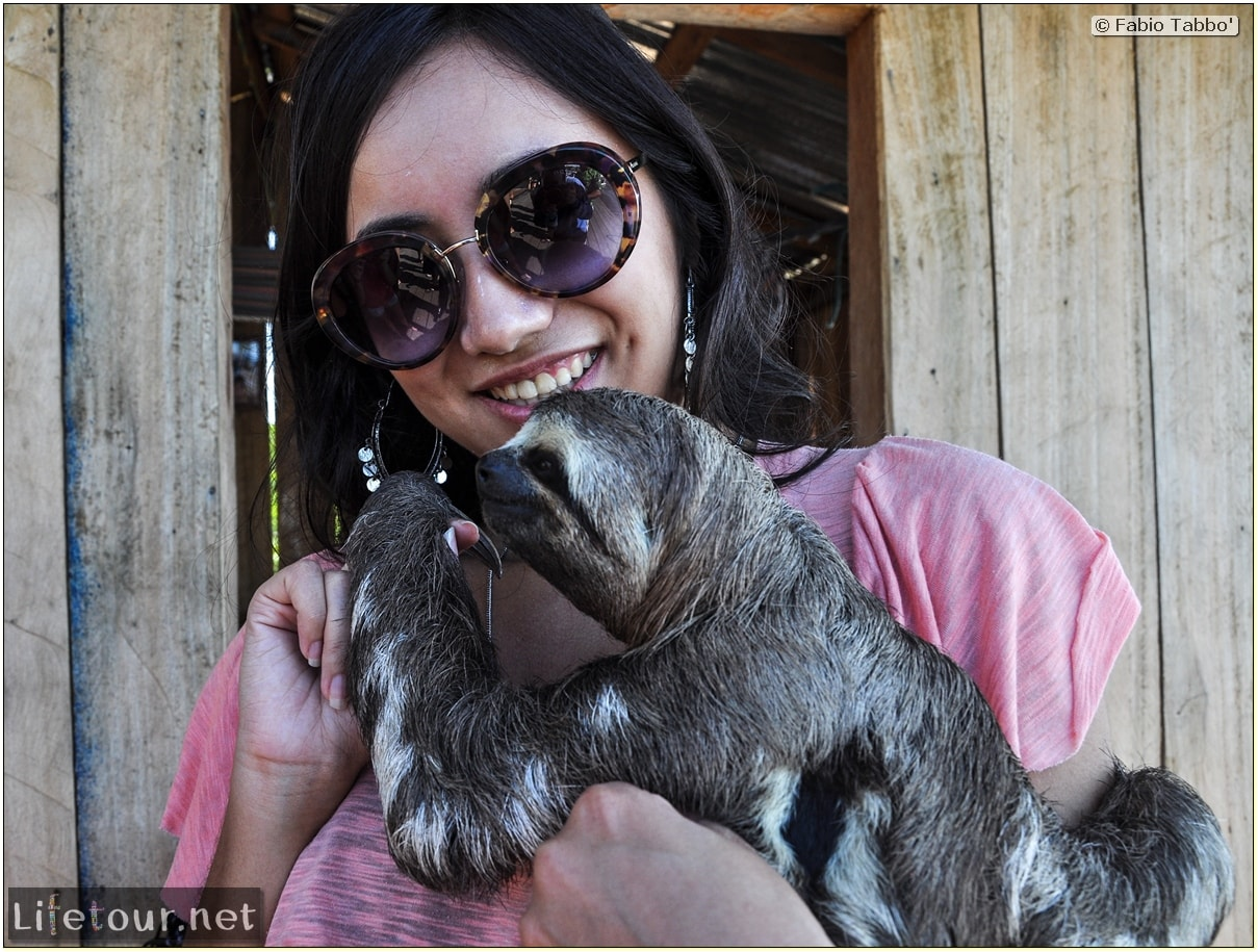 Fabio's LifeTour - Brazil (2015 April-June and October) - Manaus - Amazon Jungle - Sloth petting - 11046