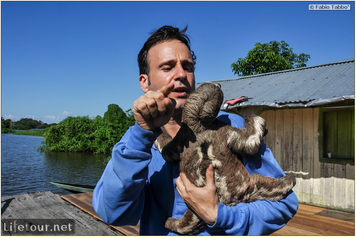 Fabio's LifeTour - Brazil (2015 April-June and October) - Manaus - Amazon Jungle - Sloth petting - 11275 cover