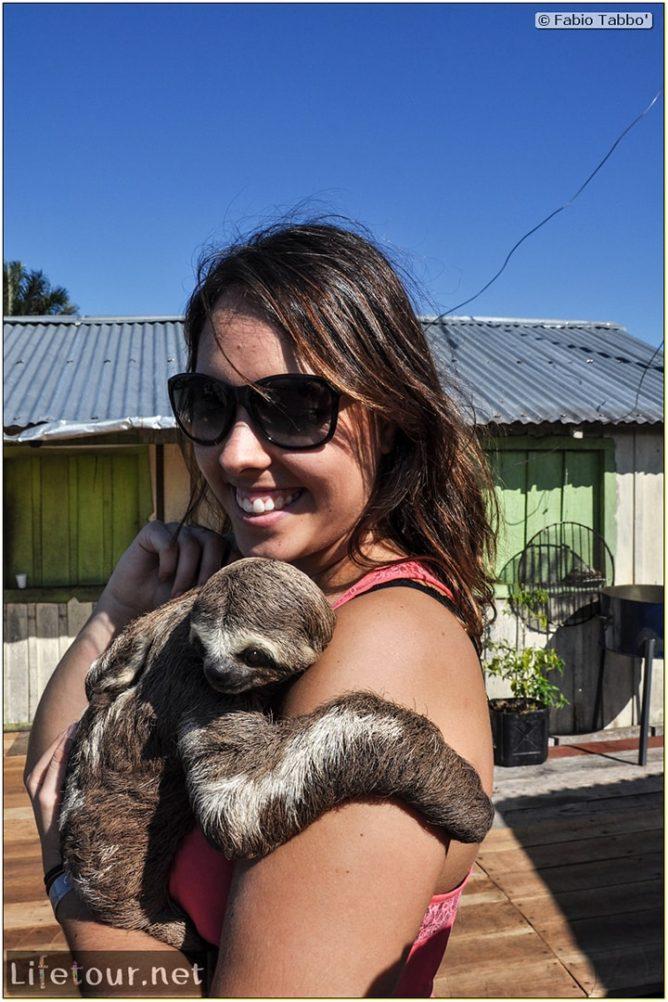 Fabio's LifeTour - Brazil (2015 April-June and October) - Manaus - Amazon Jungle - Sloth petting - 11369