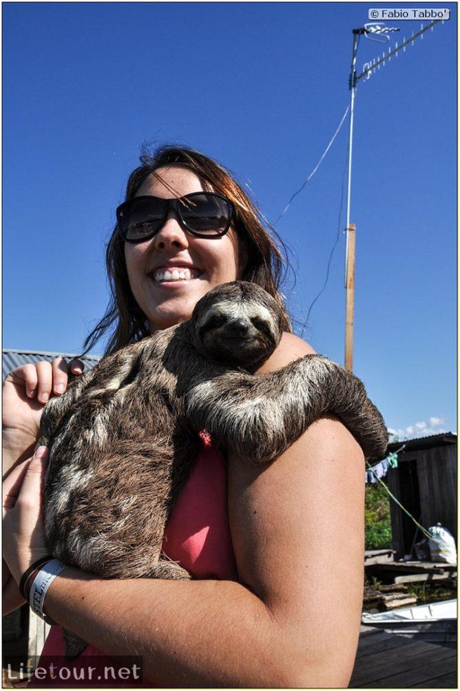 Fabio's LifeTour - Brazil (2015 April-June and October) - Manaus - Amazon Jungle - Sloth petting - 11391