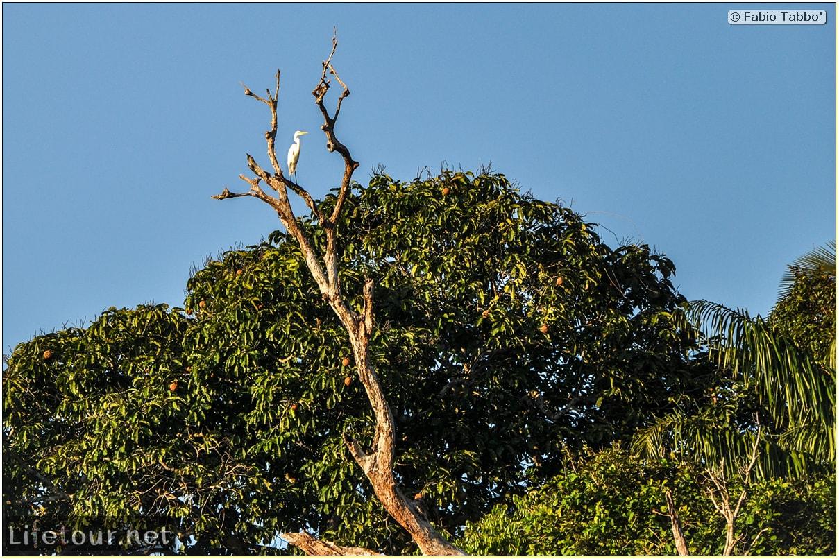 Fabio's LifeTour - Brazil (2015 April-June and October) - Manaus - Amazon Jungle - Sunrise on the Amazon - 10777