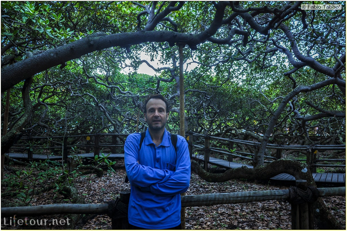 Fabio's LifeTour - Brazil (2015 April-June and October) - Natal - Cajuero - 3702