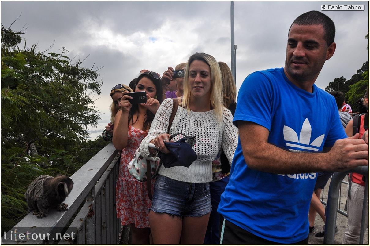 Fabio's LifeTour - Brazil (2015 April-June and October) - Rio De Janeiro - Corcovado - Playing with Monkeys-Raccoons - 9194
