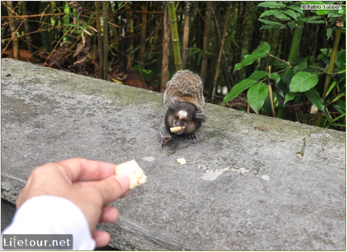 Rio De Janeiro - Trilha Do P¦o De Açúcar - 3- Feeding the monkey-raccoons - 530 cover