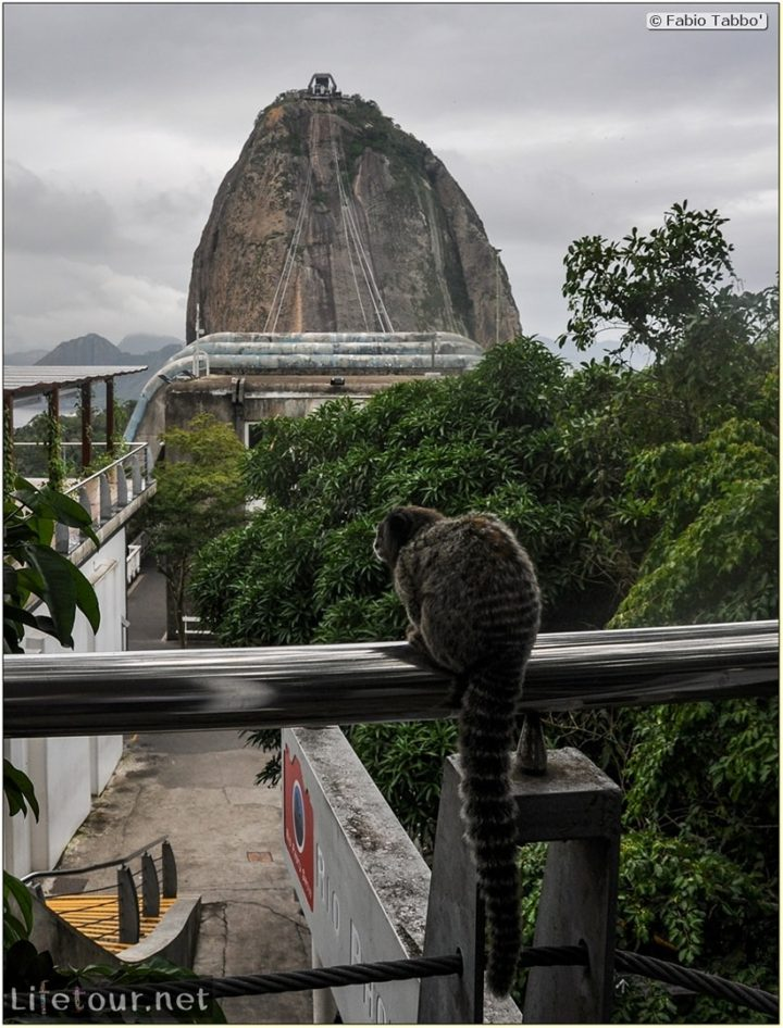 Rio De Janeiro - Trilha Do P¦o De Açúcar - 3- Feeding the monkey-raccoons - 702