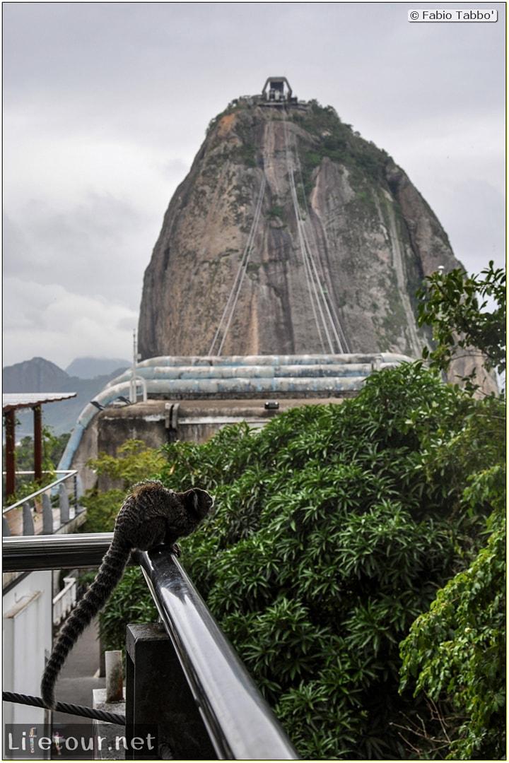Rio De Janeiro - Trilha Do P¦o De Açúcar - 3- Feeding the monkey-raccoons - 722
