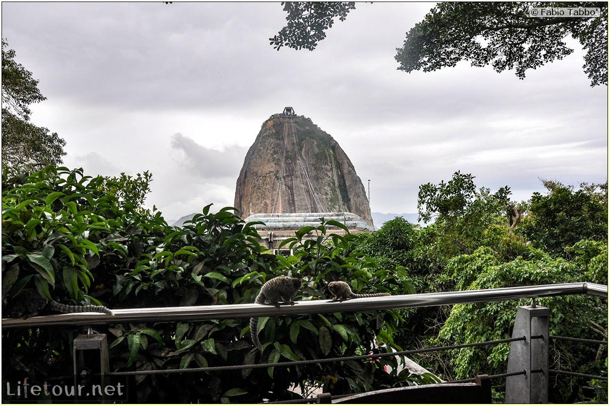 Rio De Janeiro - Trilha Do P¦o De Açúcar - 3- Feeding the monkey-raccoons - 819 cover