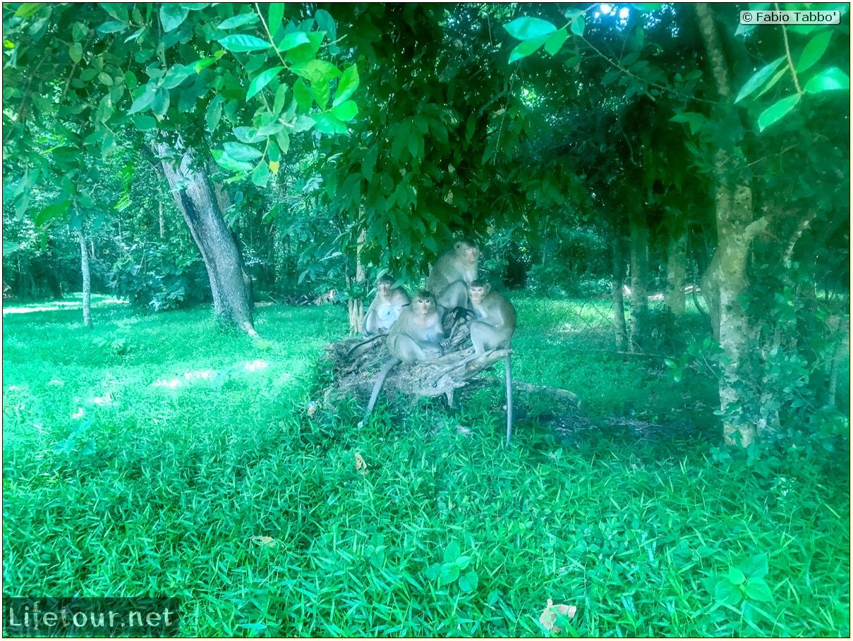 Fabio_s-LifeTour---Cambodia-(2017-July-August)---Siem-Reap-(Angkor)---Angkor-temples---Angkor-Wat---Monkeys-in-Angkor-Wat---18597