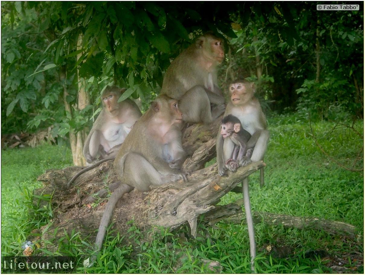 Fabio_s-LifeTour---Cambodia-(2017-July-August)---Siem-Reap-(Angkor)---Angkor-temples---Angkor-Wat---Monkeys-in-Angkor-Wat---20240