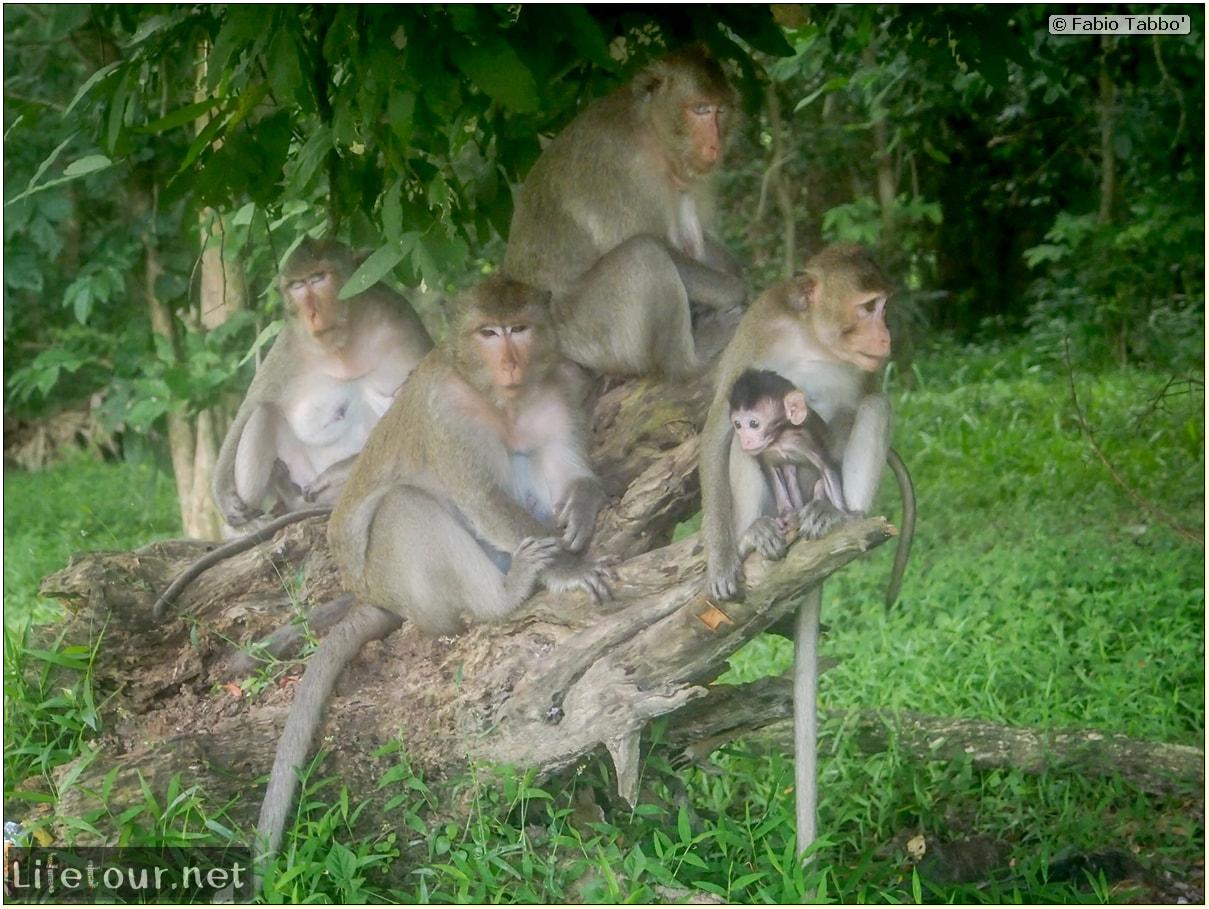 Fabio_s-LifeTour---Cambodia-(2017-July-August)---Siem-Reap-(Angkor)---Angkor-temples---Angkor-Wat---Monkeys-in-Angkor-Wat---20241-cover