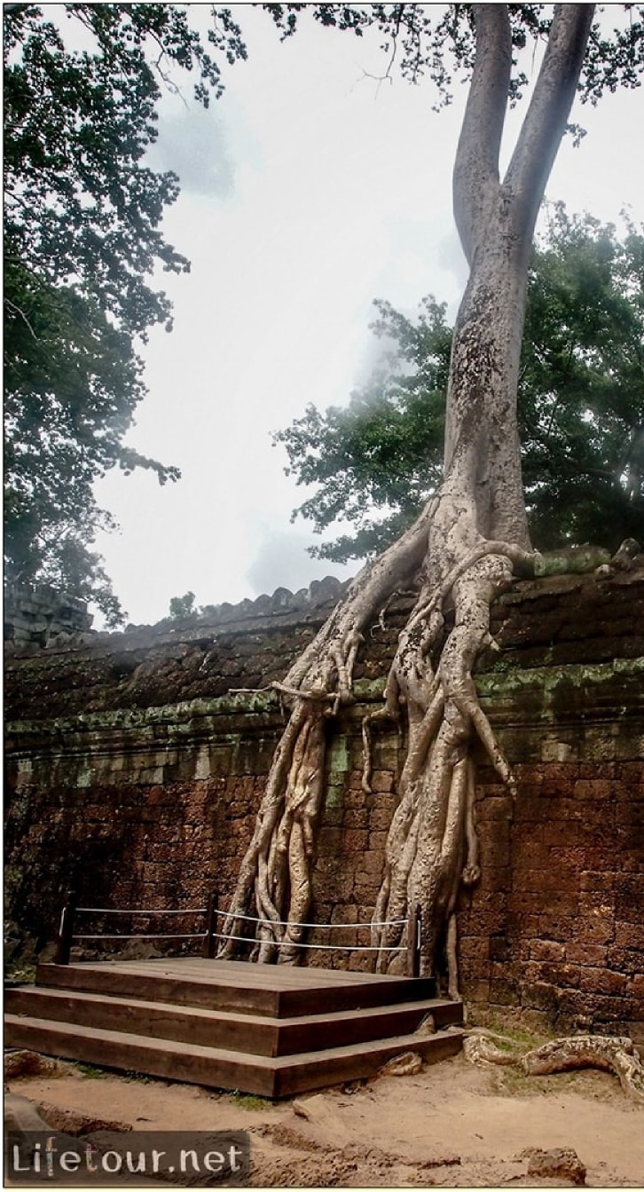 Fabio_s-LifeTour-Cambodia-2017-July-August-Siem-Reap-Angkor-Angkor-temples-Ta-Prohm-temple-20253