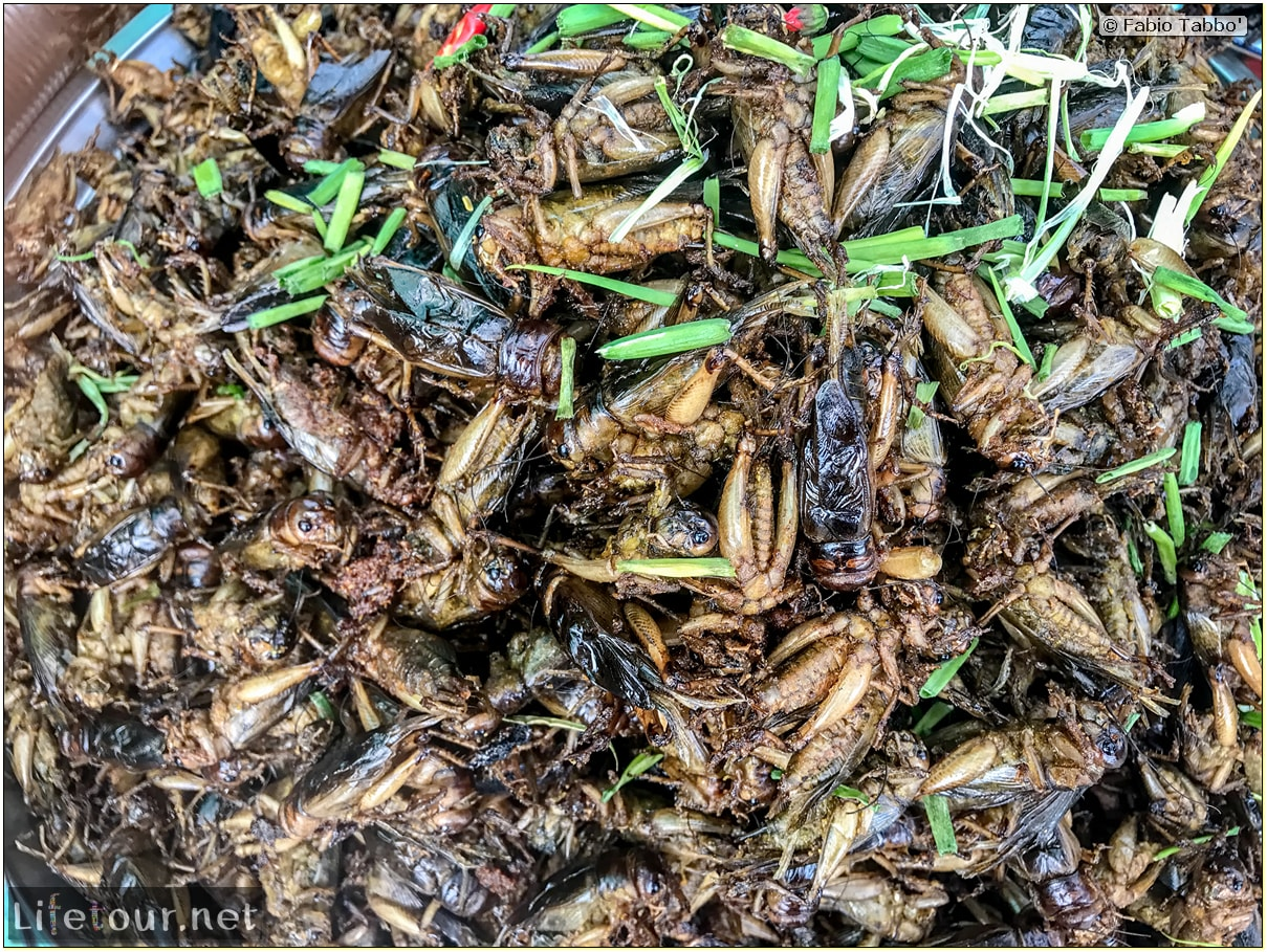Fabio_s-LifeTour---Cambodia-(2017-July-August)---Skun---Other-edible-insects-(scorpions,-beetles-etc.)---18406