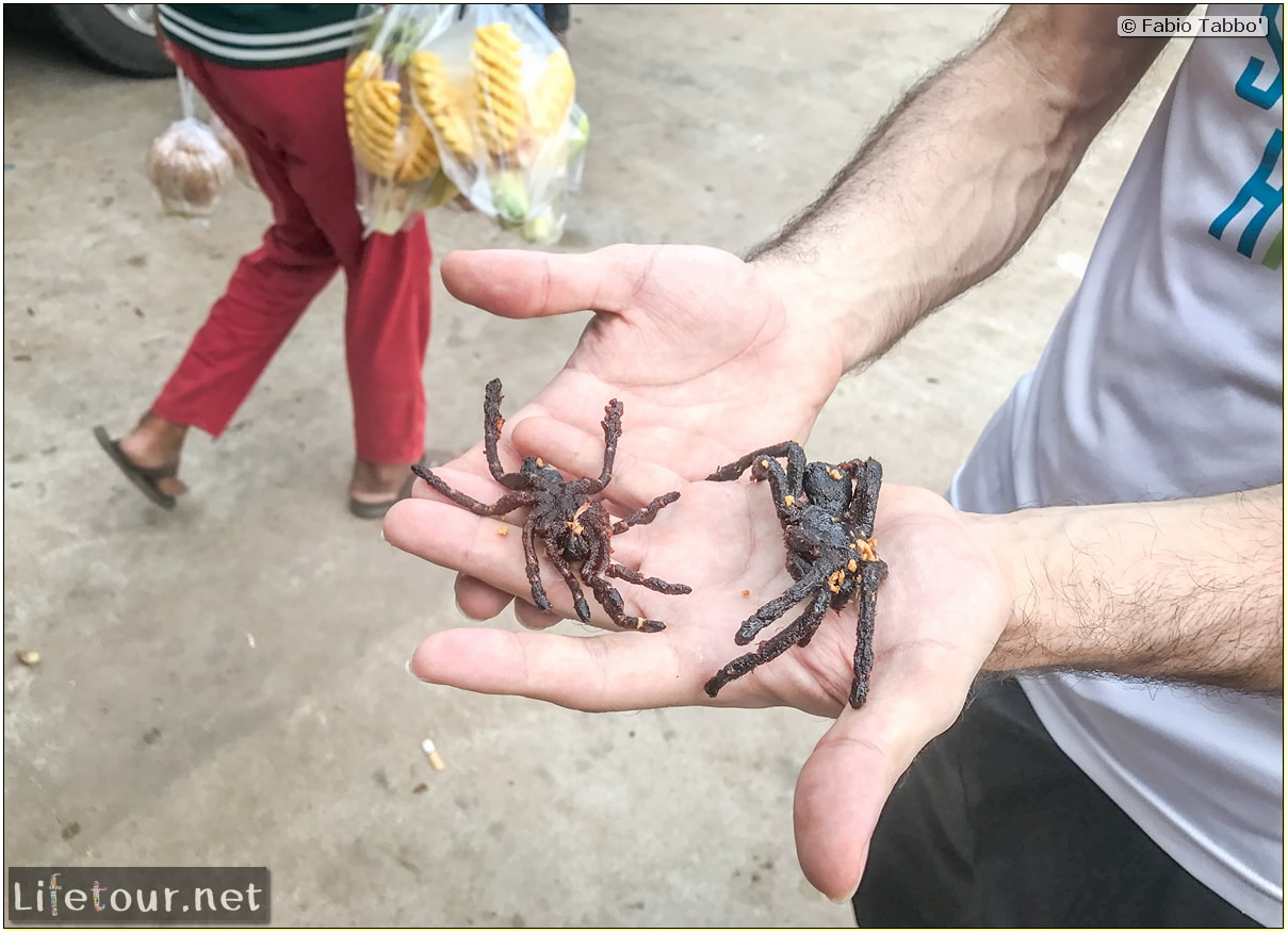 Fabio_s-LifeTour---Cambodia-(2017-July-August)---Skun---Playing-with-tarantulas-(and-eating-them-afterwards)---18391