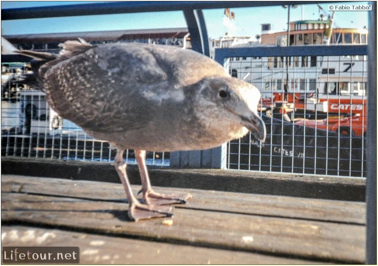 Fabio_s-LifeTour---Canada-(1998-November---1999-February)---Vancouver---City-center---13454
