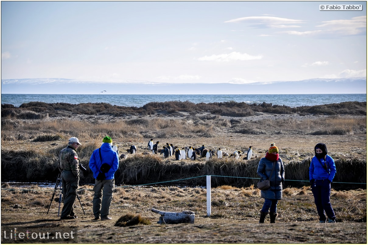 Fabio_s-LifeTour---Chile-(2015-September)---Porvenir---Tierra-del-Fuego---Parque-Penguinos-Rey---3--Emperor-pinguins---11256