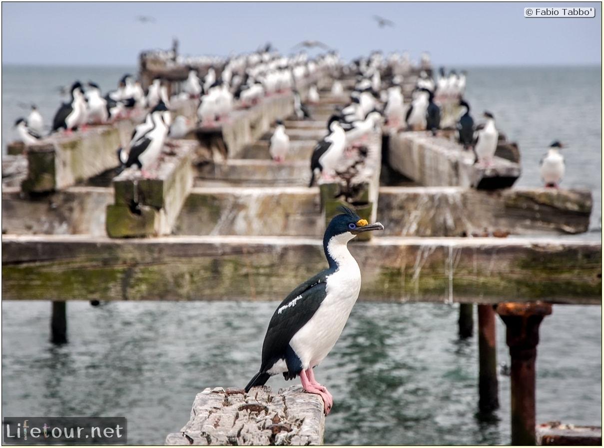 Fabio_s-LifeTour---Chile-(2015-September)---Punta-Arenas---Plaza-Fundacional-(waterfront)---6383 cover
