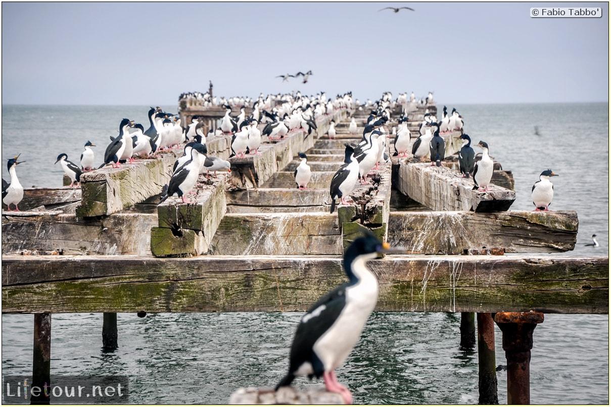 Fabio_s-LifeTour---Chile-(2015-September)---Punta-Arenas---Plaza-Fundacional-(waterfront)---6418