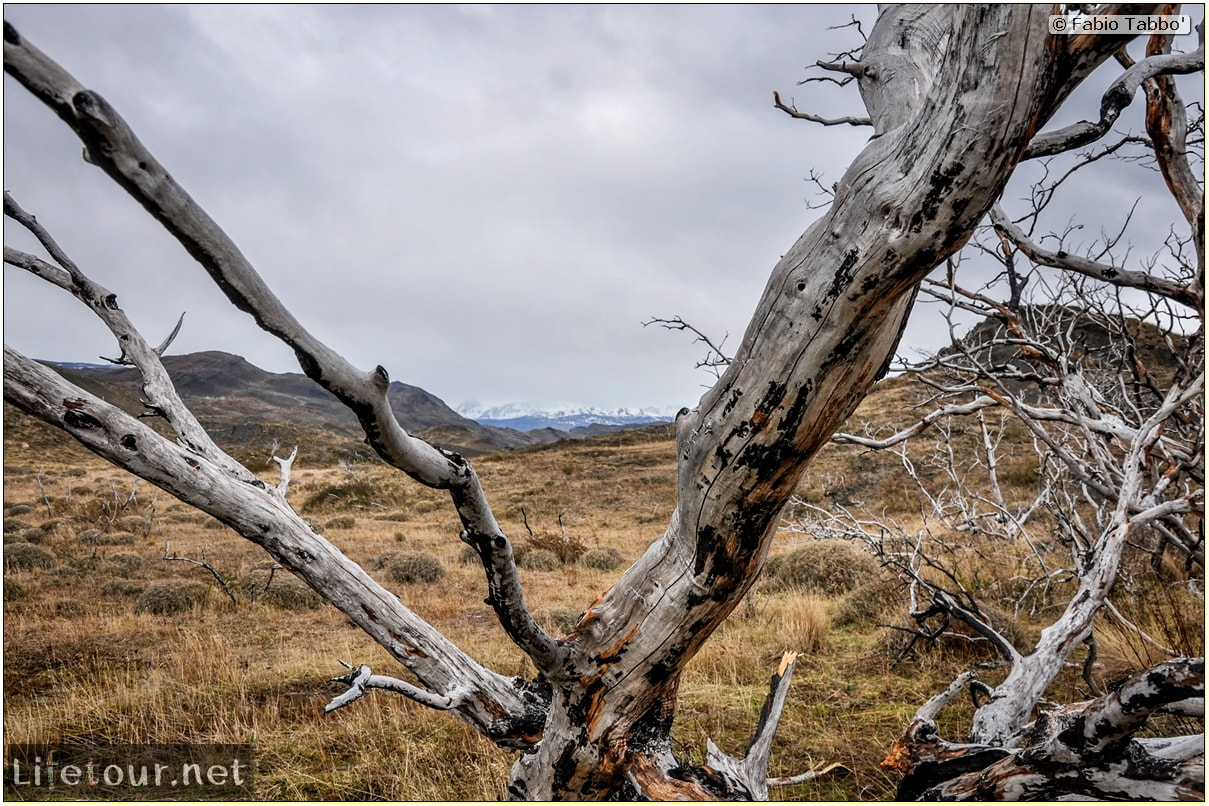 Fabio_s-LifeTour---Chile-(2015-September)---Torres-del-Paine---Ghost-forest---11766