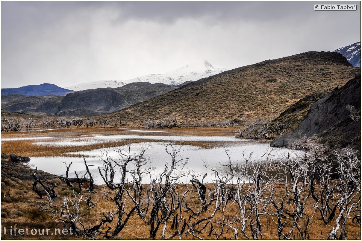 Fabio_s-LifeTour---Chile-(2015-September)---Torres-del-Paine---Ghost-forest---11808