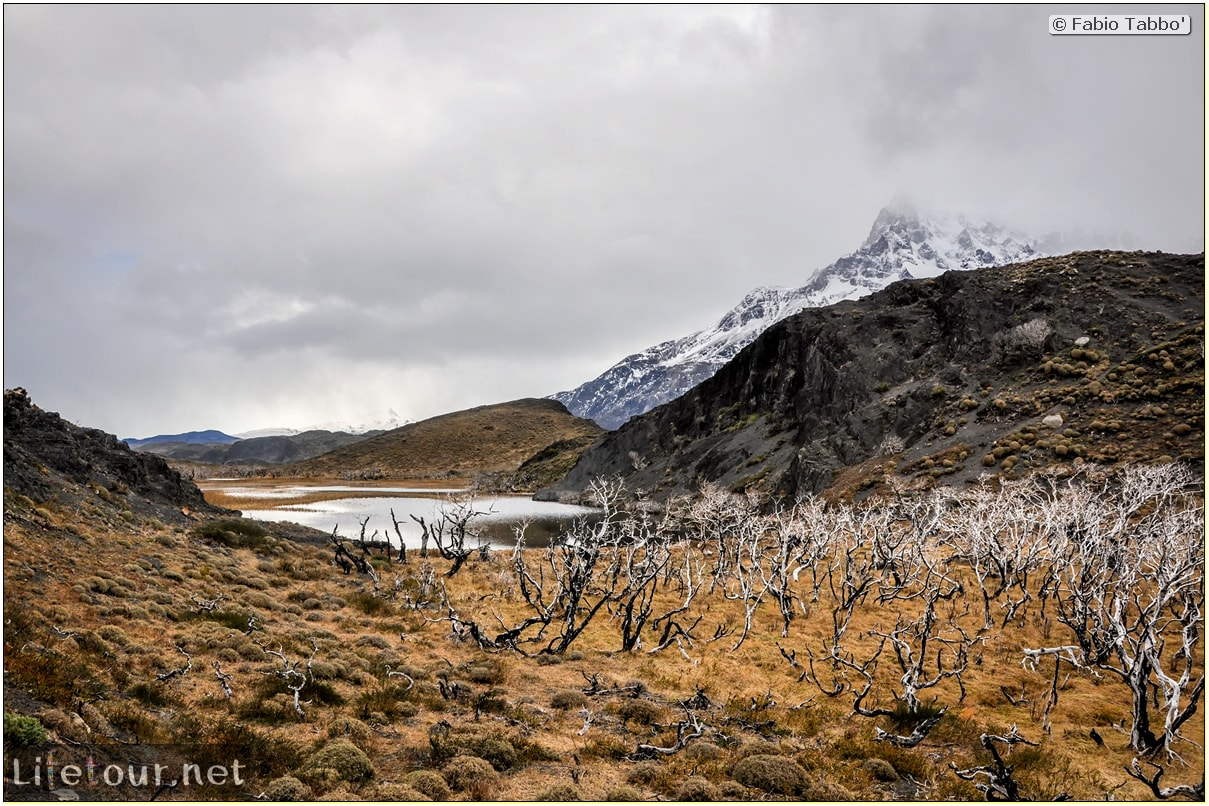 Fabio_s-LifeTour---Chile-(2015-September)---Torres-del-Paine---Ghost-forest---11847 cover