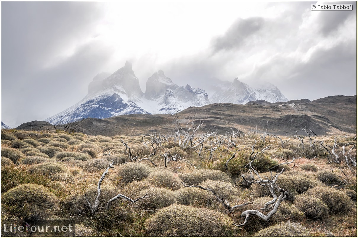 Fabio_s-LifeTour---Chile-(2015-September)---Torres-del-Paine---Ghost-forest---12064