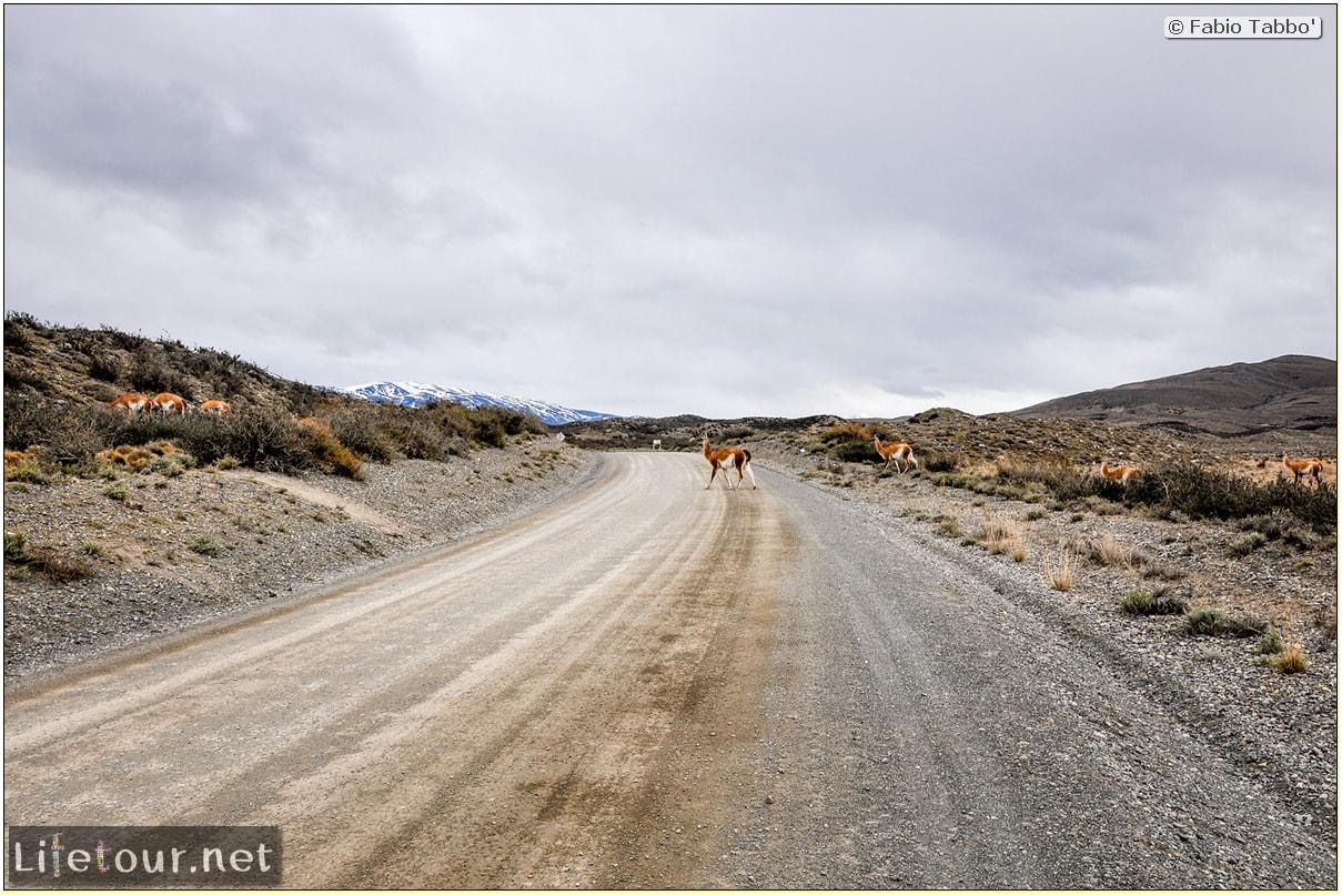 Fabio_s-LifeTour---Chile-(2015-September)---Torres-del-Paine---Lama-Crossing---10182