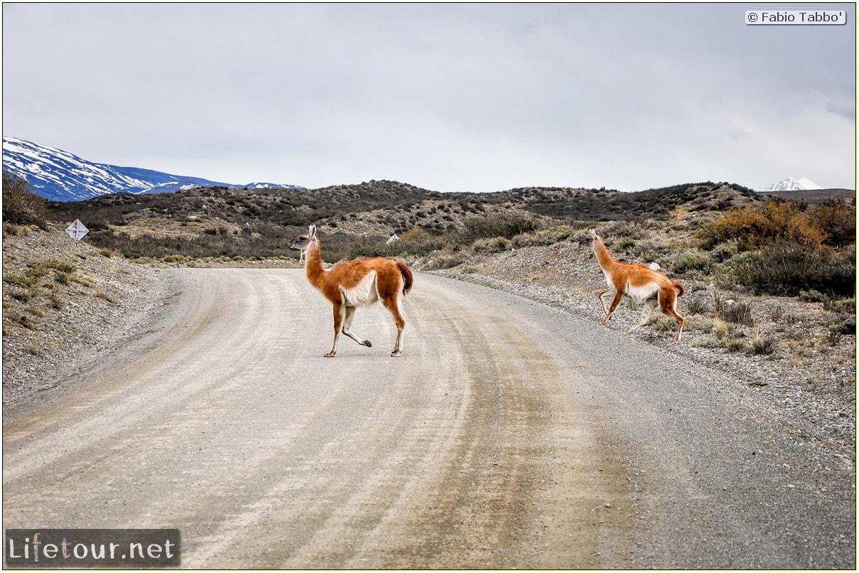 Fabio_s-LifeTour---Chile-(2015-September)---Torres-del-Paine---Lama-Crossing---10236