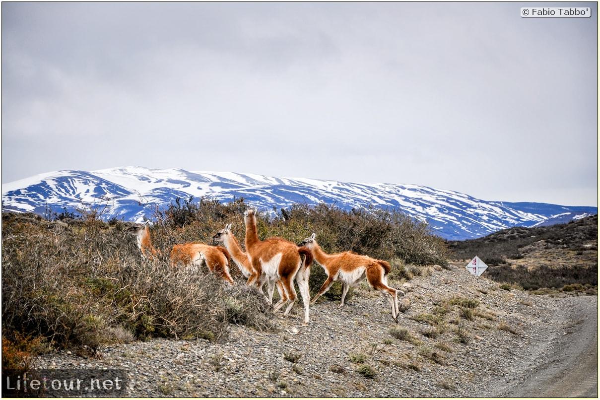 Fabio_s-LifeTour---Chile-(2015-September)---Torres-del-Paine---Lama-Crossing---10561