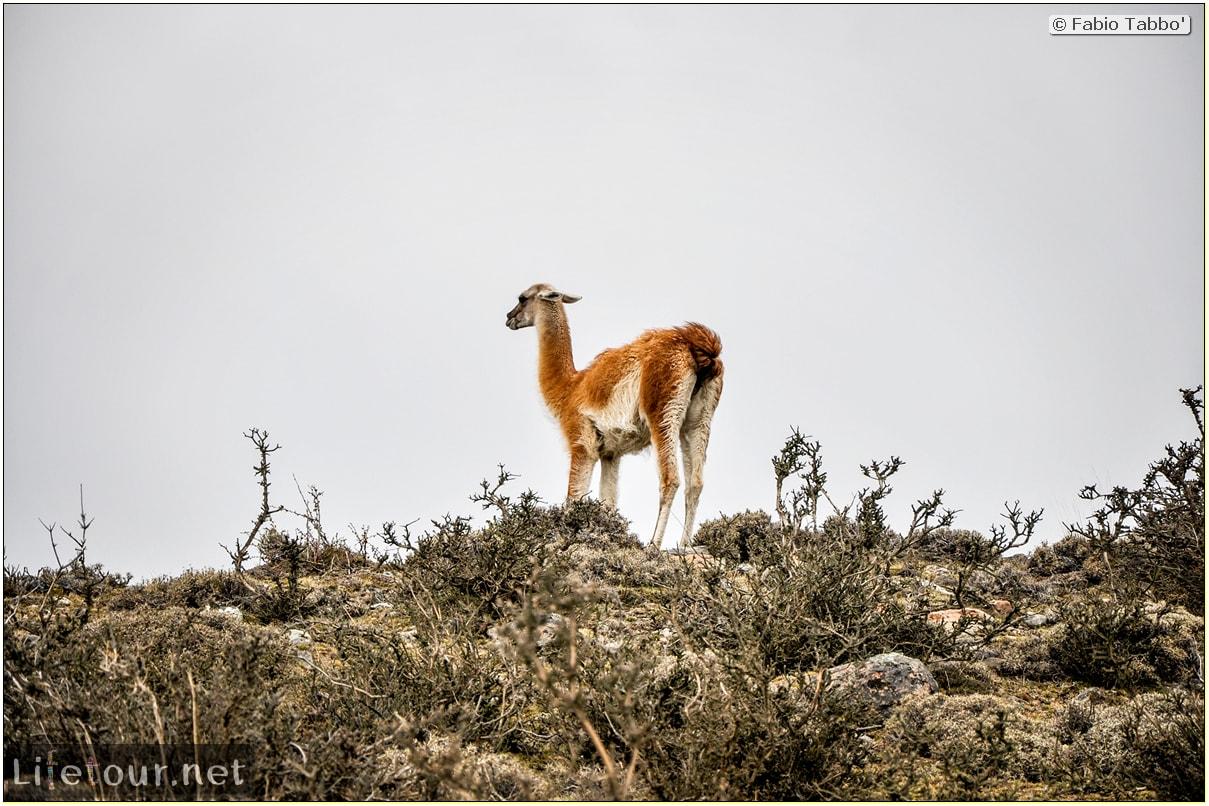 Fabio_s-LifeTour---Chile-(2015-September)---Torres-del-Paine---Lama-Crossing---10700