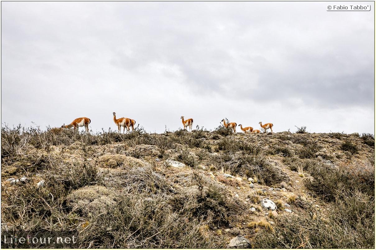 Fabio_s-LifeTour---Chile-(2015-September)---Torres-del-Paine---Lama-Crossing---10714