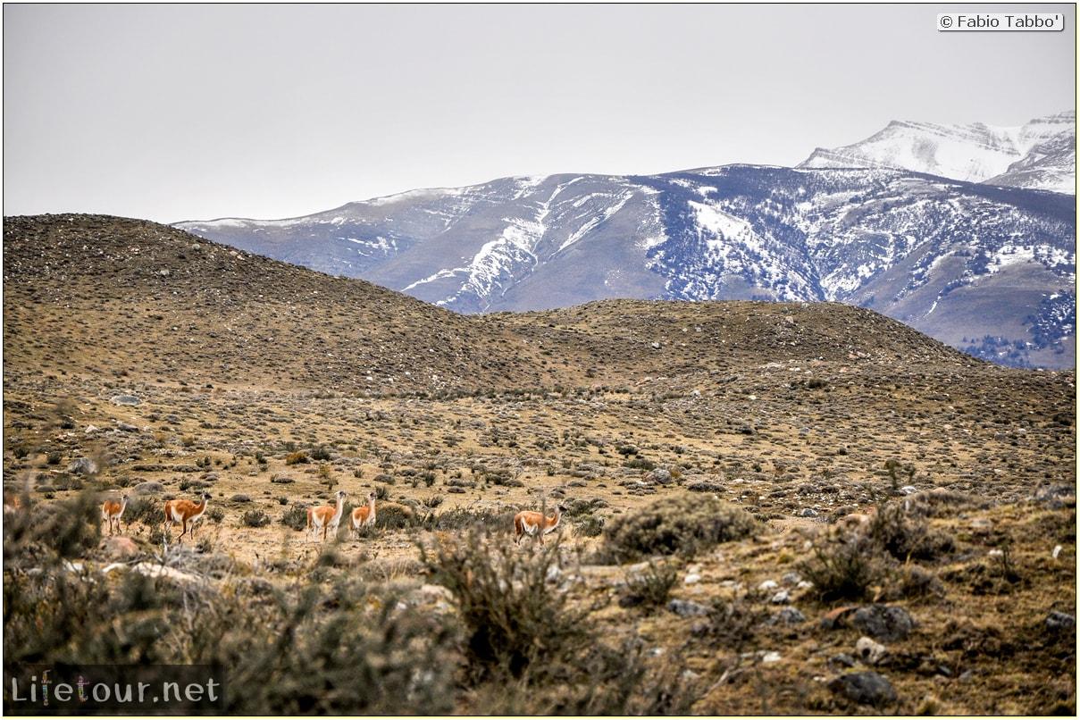 Fabio_s-LifeTour---Chile-(2015-September)---Torres-del-Paine---Lama-Crossing---10769