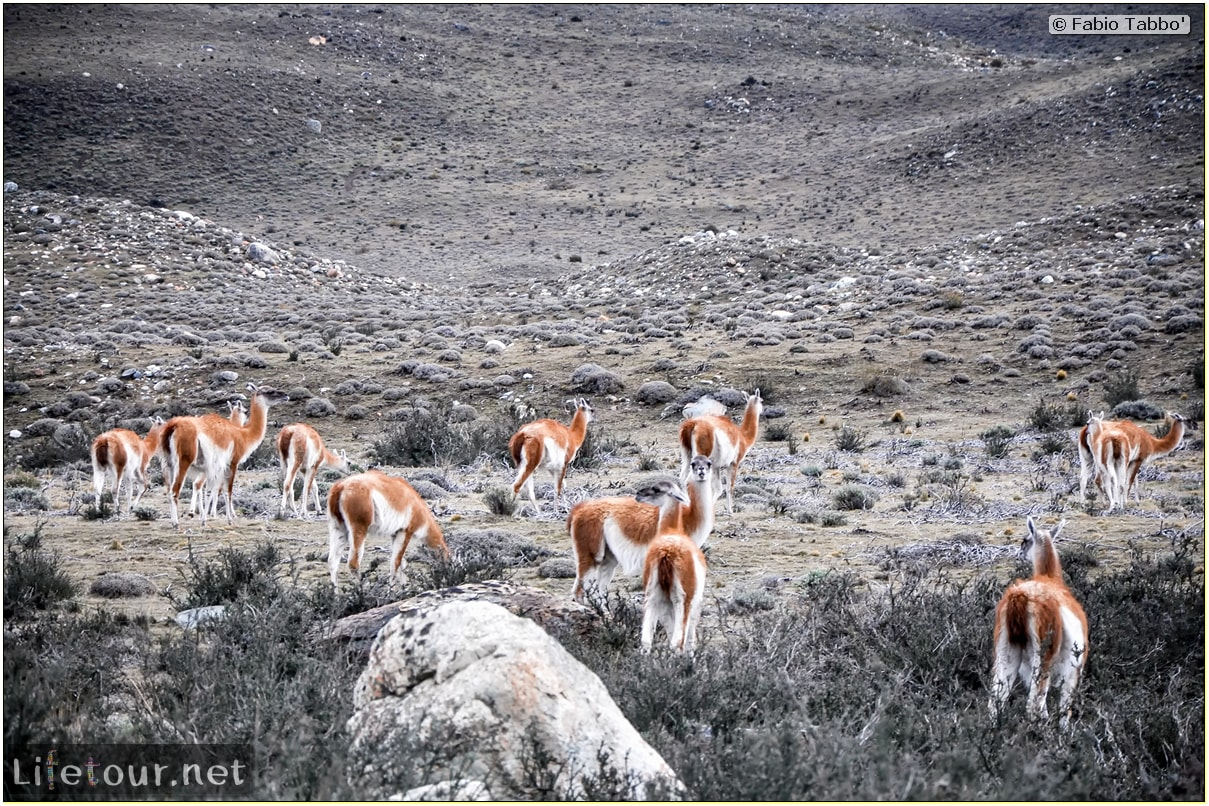 Fabio_s-LifeTour---Chile-(2015-September)---Torres-del-Paine---Lama-Crossing---10966