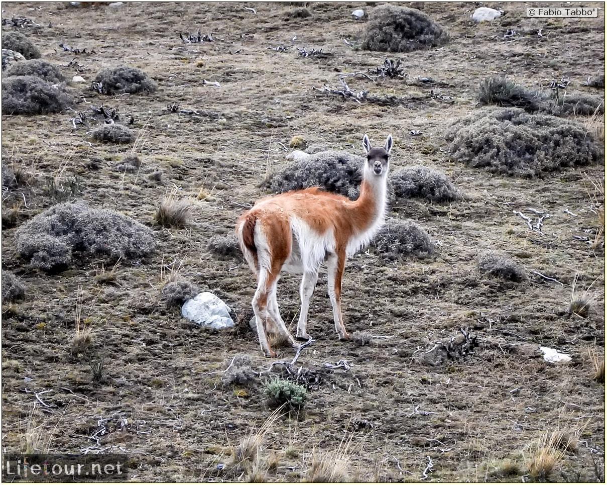Fabio_s-LifeTour---Chile-(2015-September)---Torres-del-Paine---Lama-Crossing---11044
