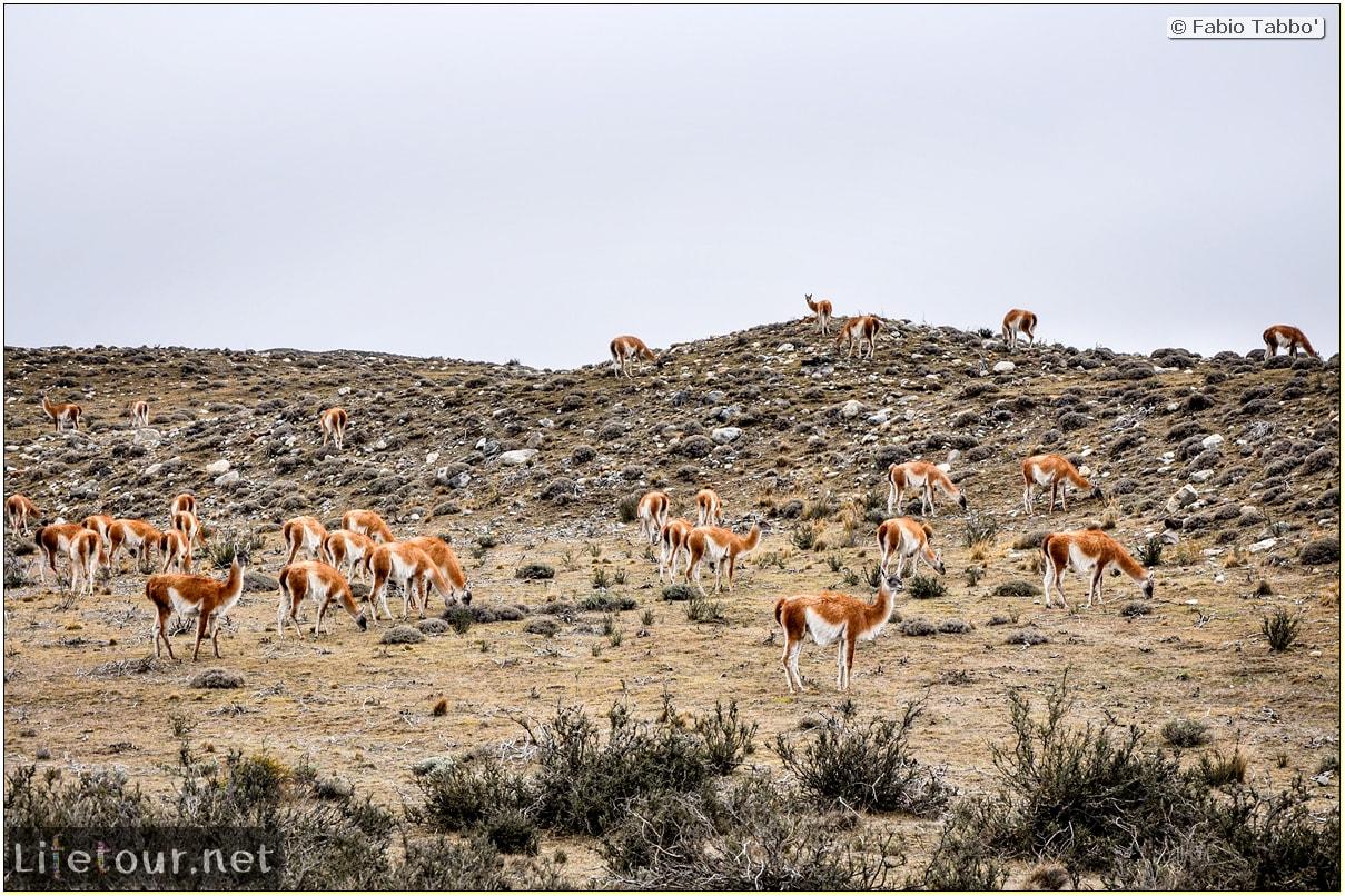 Fabio_s-LifeTour---Chile-(2015-September)---Torres-del-Paine---Lama-Crossing---11107