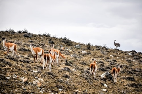 Fabio_s-LifeTour---Chile-(2015-September)---Torres-del-Paine---Lama-Crossing---11139 cover