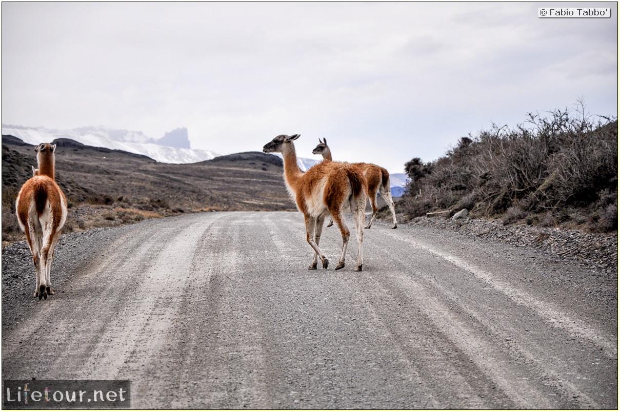 Fabio_s-LifeTour---Chile-(2015-September)---Torres-del-Paine---Lama-Crossing---11402